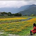 2021-鳳林溪水岸黃波斯菊