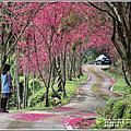2021-鳳林櫻花步道