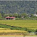 2021-瑞穗稻香、七腳川溪