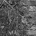 『啾是愛拍』艋舺的黑白映畫