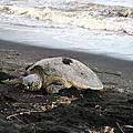 2016春夏威夷大島-黑沙灘綠沙灘