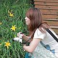 金針花,濕地,夜景@台中