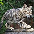 2014猴銅 貓咪