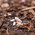 2009-05-03 油桐花坊
