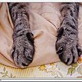 2012-09-08[貓記]老貓快出來與大家見見面
