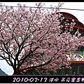 z017_2010.03 淡水天元宮吉野櫻