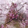 小夜@the blossom