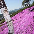 北海道自駕賞花趣(20090519〜20090524)