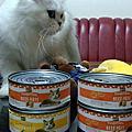 歐美貓主食罐merrick試吃!