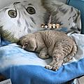 四貓+一寶