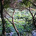 新竹科學園區靜心湖