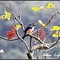 大雪山賞鳥20121222