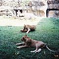 10.06.08 全家去動物園
