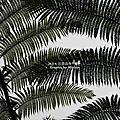 2008/04/19-20 南投忘憂森林