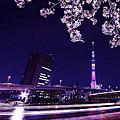 隅田川夜櫻船