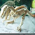 【育兒好物】找玩具FindToy,探索恐龍化石-恐龍玩具,diy模仿挖掘玩具。呱呱吃豆豆,全家一起加倍快樂!