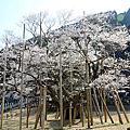 2013春‧日本