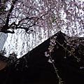 2009春‧日本
