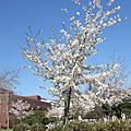 2010春‧日本