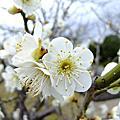 2011春‧日本