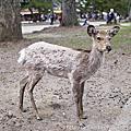 201504 日本大阪 奈良公園