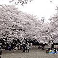 日本櫻花季