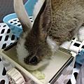 兔崽子 歐謀