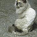 Amigo Cat