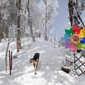 雪霧鬧賞雪Part3