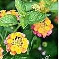2011.07.03高市熱帶植物園