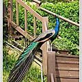 2011.07.23高雄市立動物園