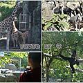 ◎台北◎木柵動物園紀錄