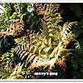 Vancouver - VanDusen Botanical Garden溫哥華植物園