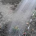 慢學院志工細心地灌溉