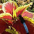 春天,校園百花盛開,蜻蜓也來了,找找看蜻蜓在那裡?