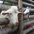 《白羊、黑羊,這是什麼羊?》