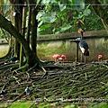 2008.09.06木栅動物園