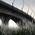 2017舊鐵橋秋芒