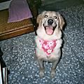 Minnie~2006/08