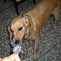 Minnie~2006/10