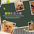 饅頭 & 五小福明信片