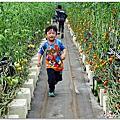 20180428 北埔麥克田園、金勇蕃茄農場