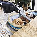 宜蘭寵物友善餐廳x幾米廣場