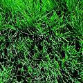 讓眼睛放輕鬆的綠色植物