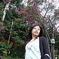Sakura 2008.0308