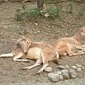 1106動物園