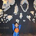 201005左營新光三越看恐龍展