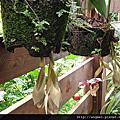 神木國小的校園植物