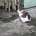 20100513侯硐看貓去