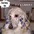 這年頭做狗不容易~~笑笑唄~~